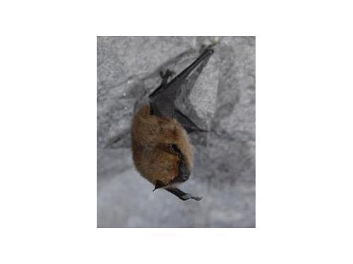 Bat control Rochester NY