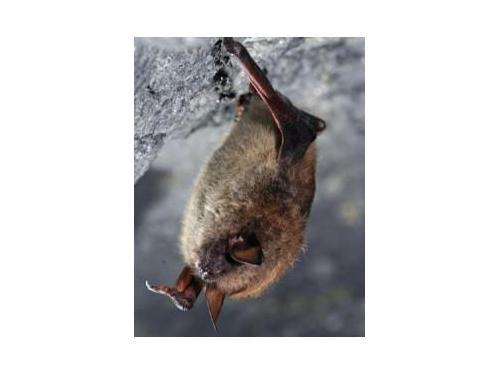 Bat exterminator Rochester NY