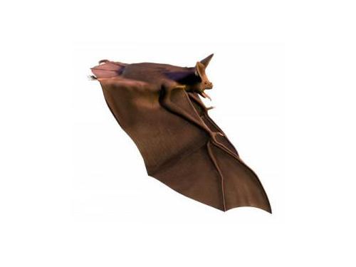 Bat removal Rochester NY