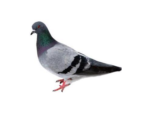 Bird problems Rochester NY