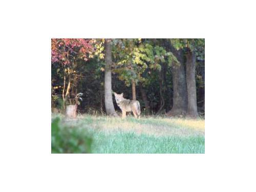 Wildlife removal Rochester NY